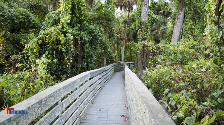 Oviedo, Florida | The Nature Trail at Sweetwater Park