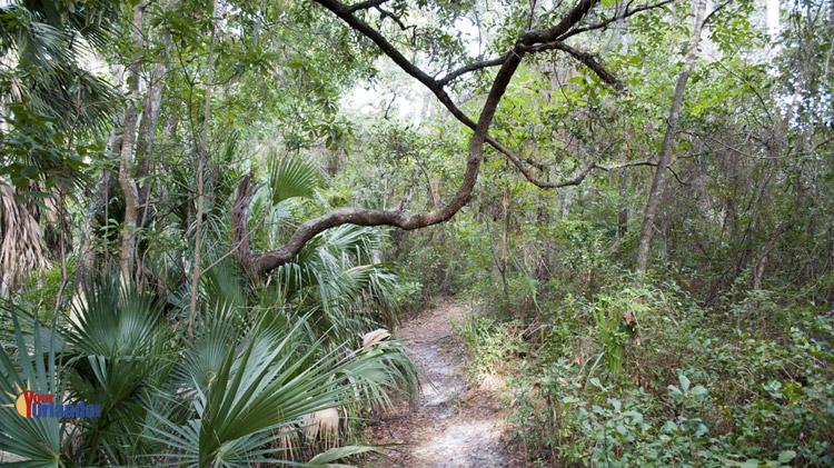 Winter Springs, Florida | Bear Creek Nature Trail