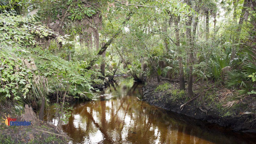 Winter Springs, Florida | Bear Creek Nature Trail