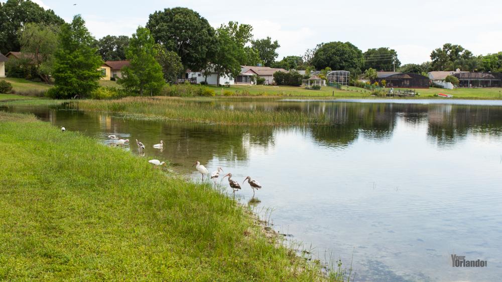 Lake Sloat - Bay Lakes at Granada - Orlando, Florida